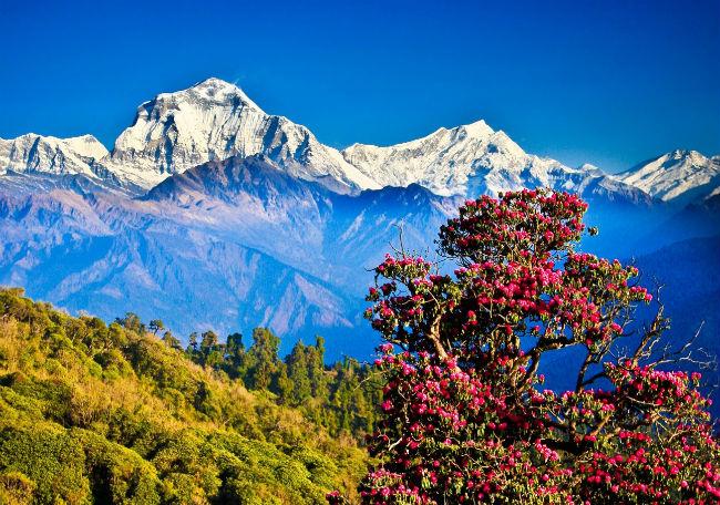 ve may bay di nepal